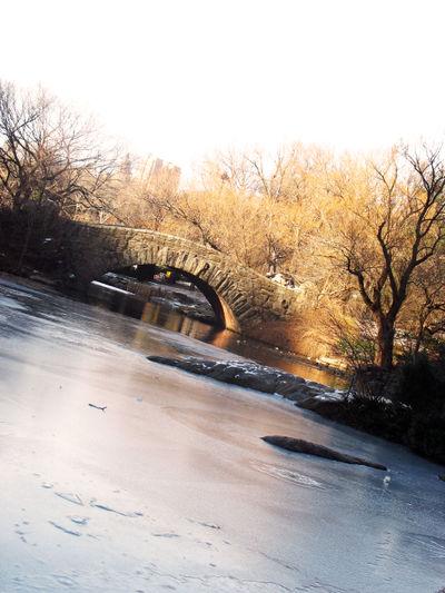 Centralpark_winter3