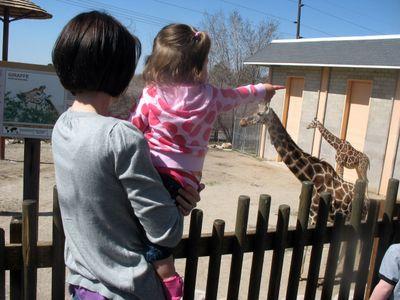 Brittmolly_giraffe