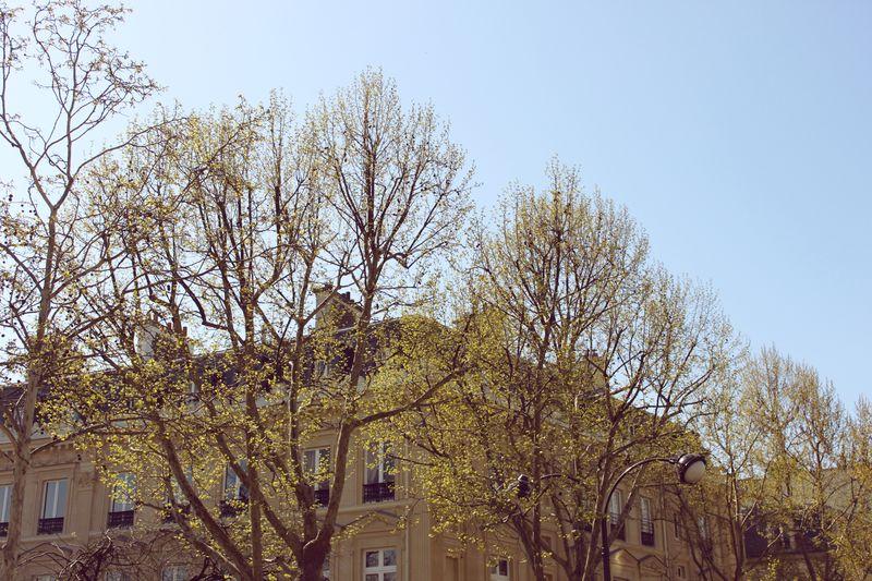 Paris_trees